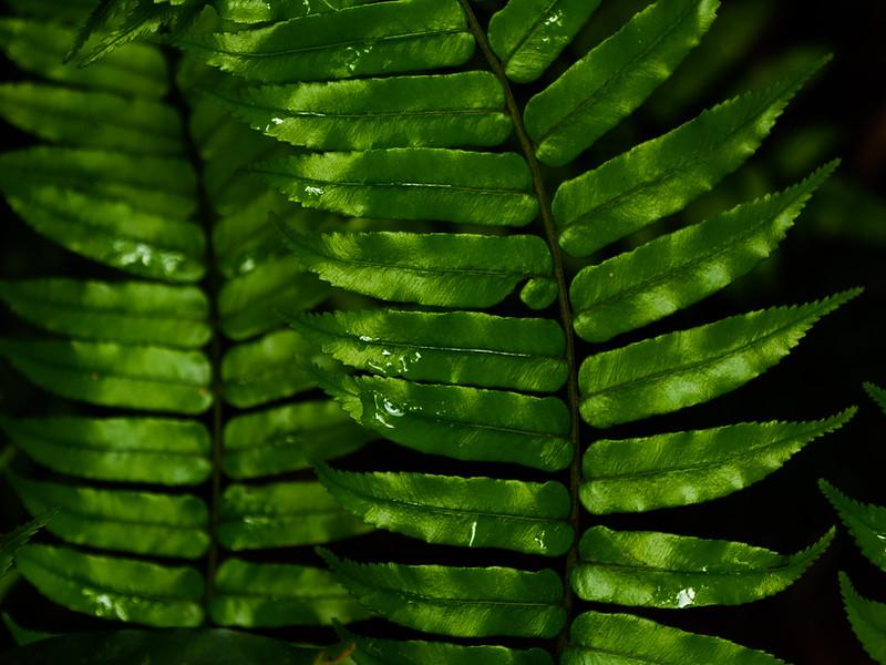 Tropical rainforest fern