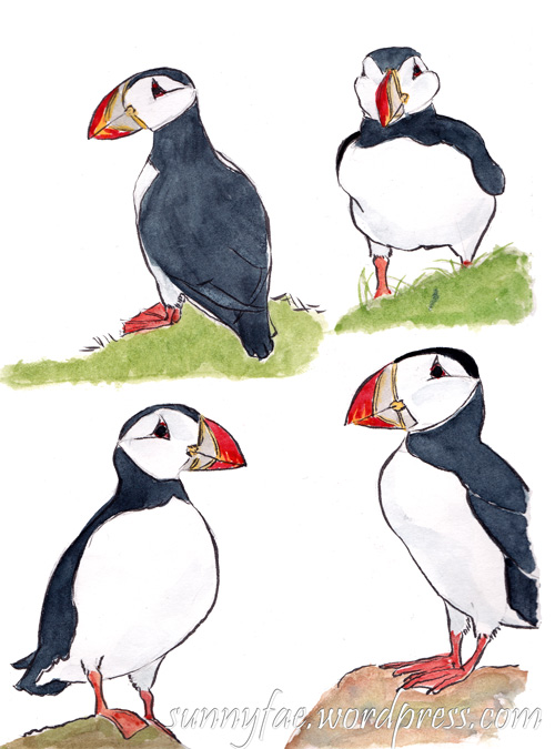 sketches of four puffins