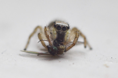 Spider Eating Fly Part 1