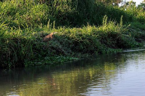 Río Arriba (23)