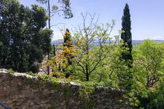0034 Parc Saint-Bernard (Hyères) - Photo of Hyères