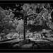 San Mauro Abad, Puntagorda, La Palma, Sony A7R IR with Voightländer Heliar Hyper Wide 10mm/5.6