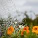 Scotland's Gardens Craigintinney Telferton July 2018 -83