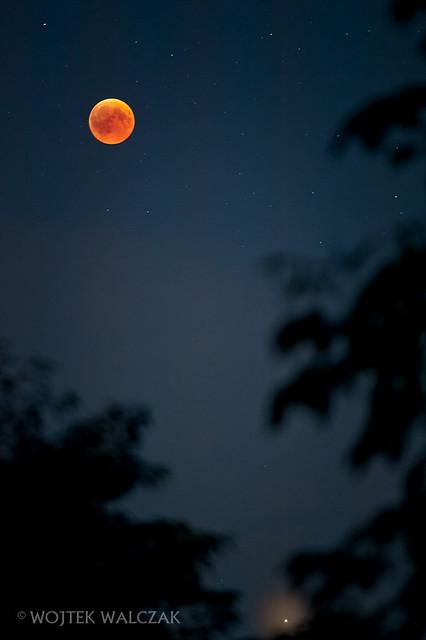 Czerwony ksi yc Blood, Nikon D700, AF-S Nikkor 300mm f/4D IF-ED