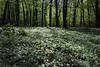 Spring in forest by MR_Bundy