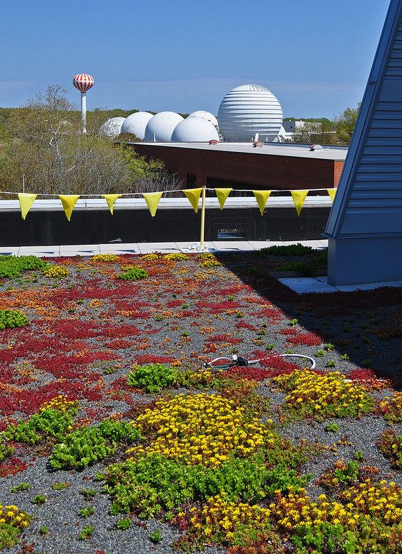 Green Roof (7)