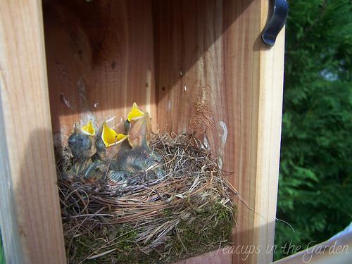 100_4728-bluebird