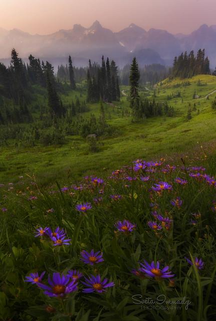 Early Morning in Paradise (Mt Rainier NP, Paradise, WA).