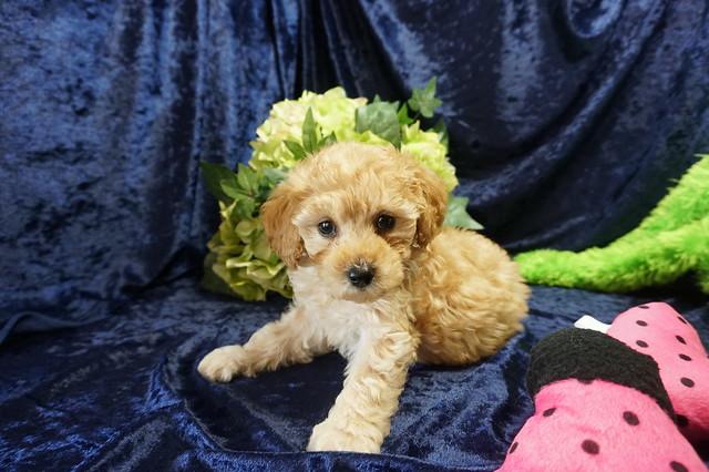 Belle  2.11 lbs 7 weeks old  (64)