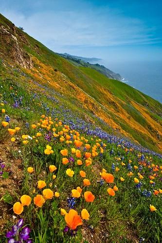 Wild Flowers Inspiration : Springtime in Big Sur, California