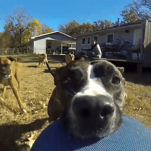 Dog steals owner's GoPro and subsequently the show