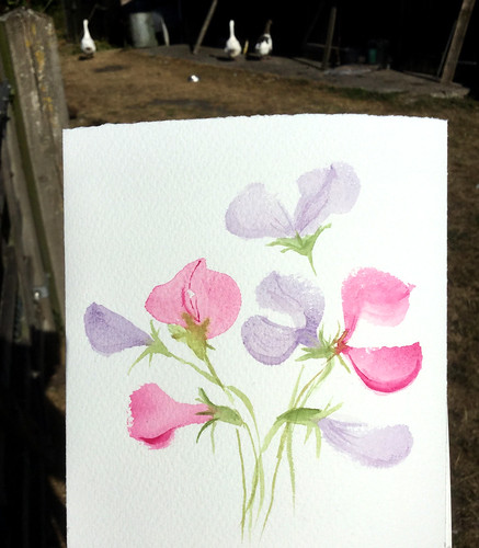 watercolour painting of sweet peas