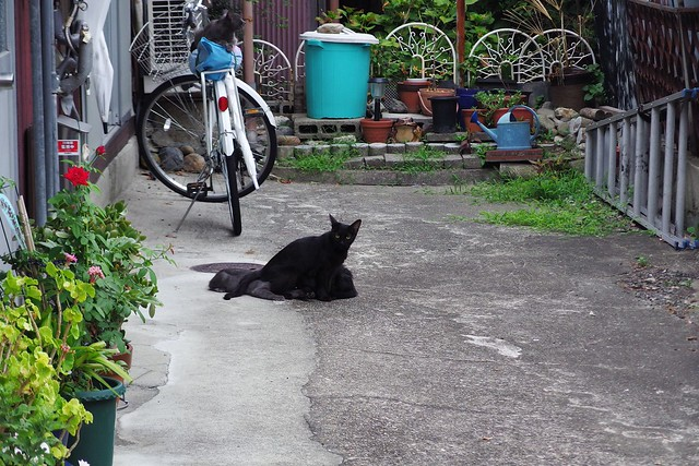 Today's Cat@2018-08-12