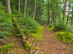 Plum Lake Hemlock Forest SNA