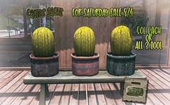 crate Cactus Sacks for The Saturday Sale <3