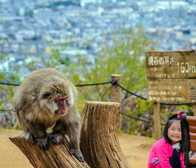 Monkey kid sign