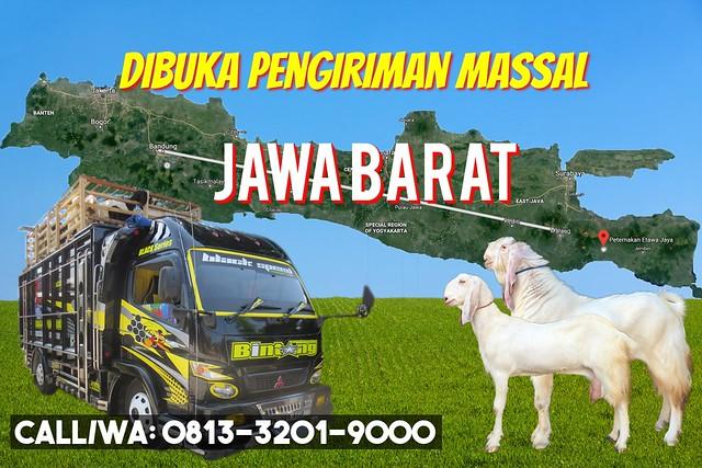 pengiriman massal kambing etawa jawa barat