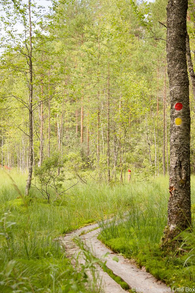huhmari, suo, pitkospuut, lomakeskus huhmari, vaellusreitit
