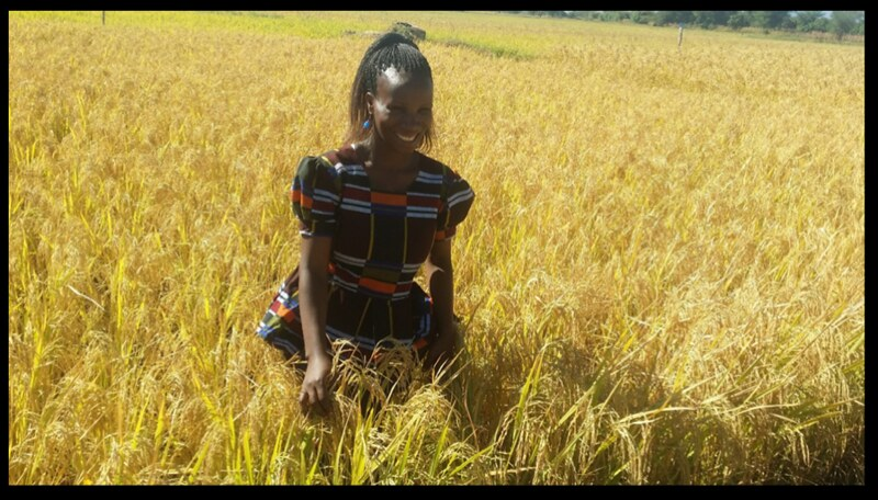 Neema Hussein at her paddy farm. Photo credit: ARI Dakawa.