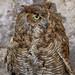 owl por ikarusmedia