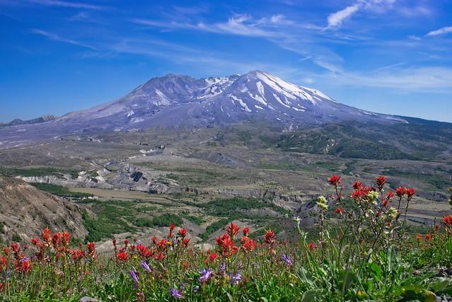 Mt St Helens Indian Paintbrush 9050 B