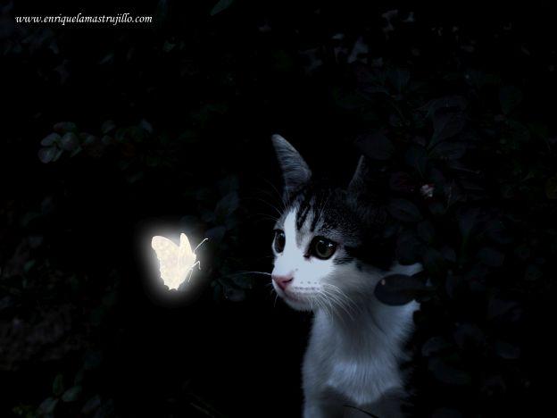 dixi-mariposa-iii-noche-flickr