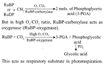 neet-aipmt-biology-chapter-wise-solutions Photosynthesis in Higher Plants - 29 explenation