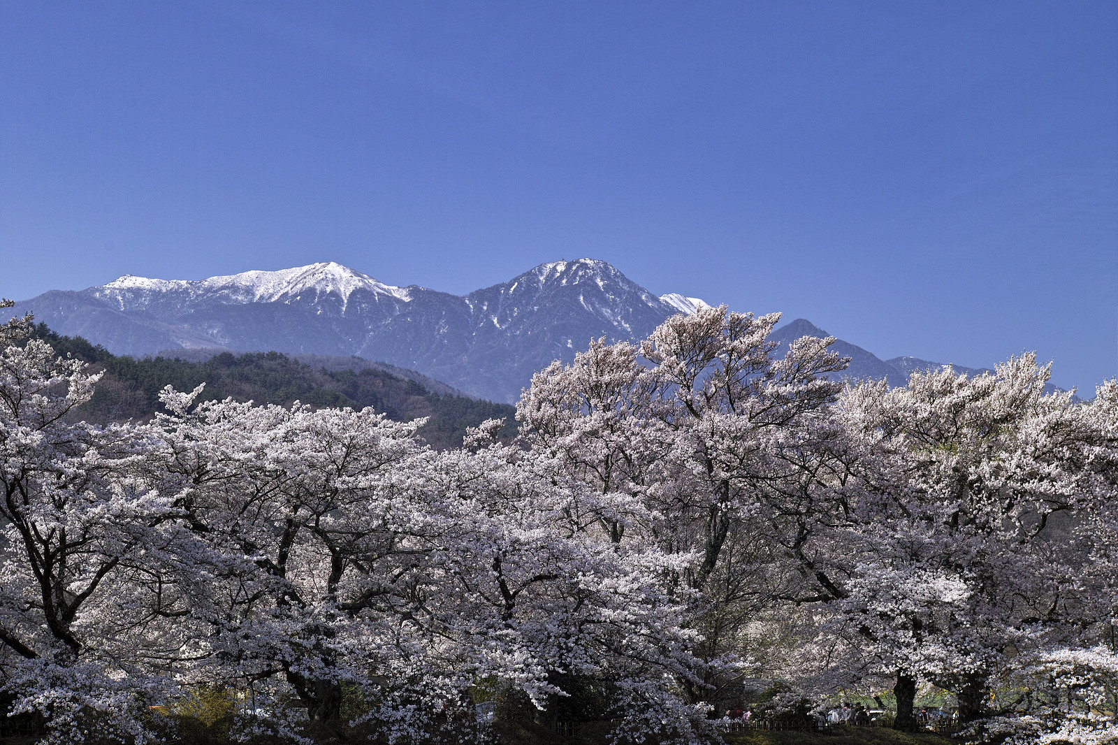 Mt. Hououzan(鳳凰山<地蔵岳・観音岳・薬師岳>)