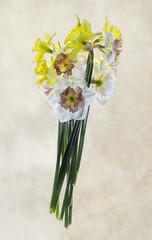 daffodil3-texture