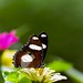 dothaiquoc64 posted a photo: