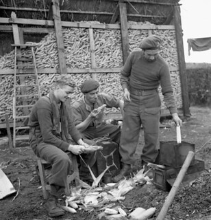 Gunners of the 4th Field Regiment, Royal Canadian Artillery (RCA), husk corn to boil for dinner, Ossendrecht, Netherlands / Artilleurs du 4e Régiment d'artillerie de campagne de l'Artillerie royale canadienne épluchant le maïs pour le souper, Ossendr