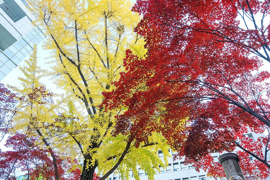 autumn_seoul_south_korea