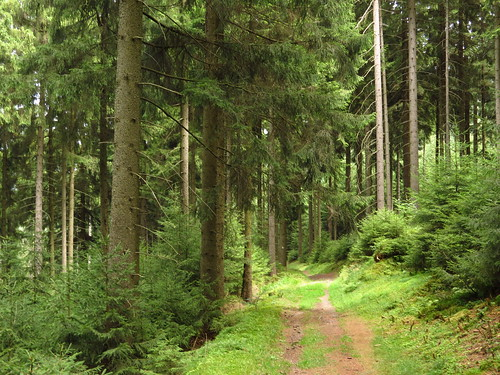 Thüringer Wald bei Goldisthal