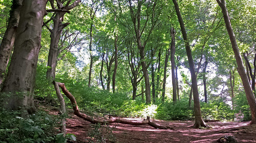 Woods at Castell Coch