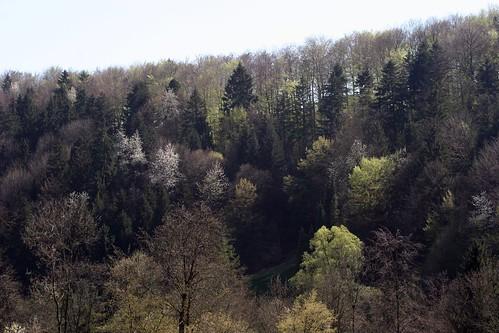 Frühling 2007/03