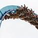 <p><a href=&quot;http://www.flickr.com/people/raptoralex/&quot;>raptoralex</a> posted a photo:</p>&#xA;&#xA;<p><a href=&quot;http://www.flickr.com/photos/raptoralex/43012913304/&quot; title=&quot;Gatekeeper's diving drop&quot;><img src=&quot;http://farm1.staticflickr.com/935/43012913304_d719d6c4ce_m.jpg&quot; width=&quot;240&quot; height=&quot;160&quot; alt=&quot;Gatekeeper's diving drop&quot; /></a></p>&#xA;&#xA;