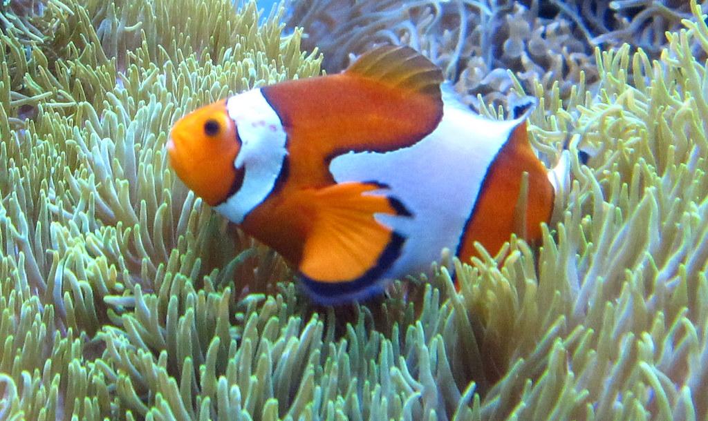clownfish001