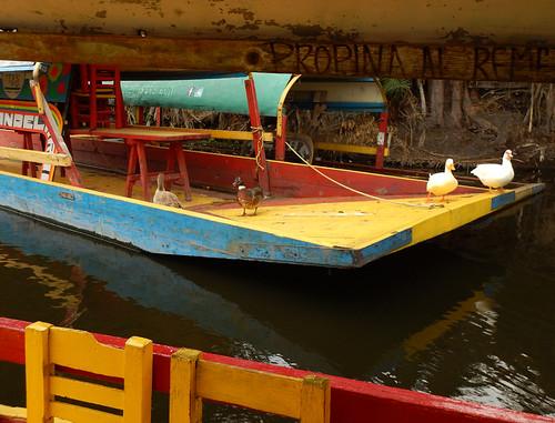 Ducks using an abandoned boat at Xochimilco near Mexico City