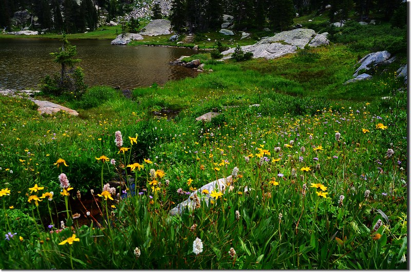 Wildflowers blooming along the lakeshore (3)