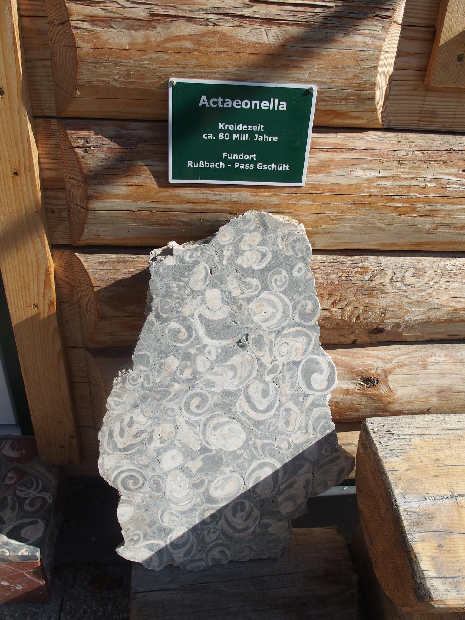 Fossiller