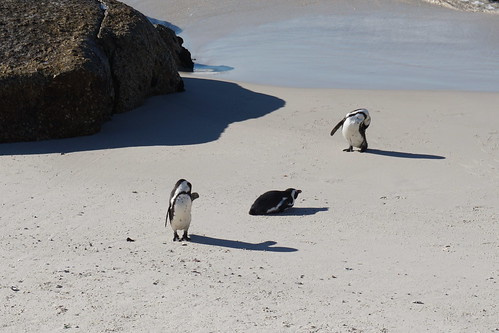 Boulders penguin colony