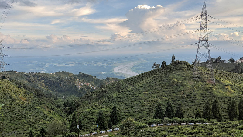 Tea gardens along side Mirik road, with Balason river in the distance