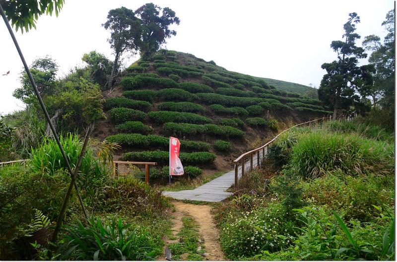 紅楠坑山(龜山、茅子埔山)茶園岔路