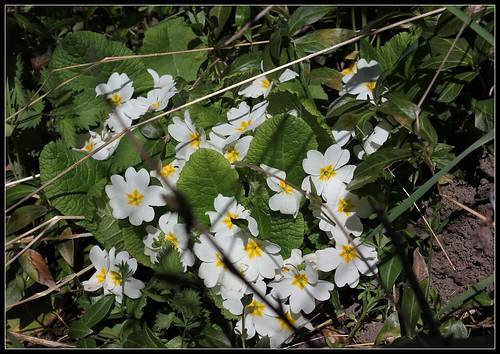 explosion florale - Page 3 41542752061_2c5ca5c883