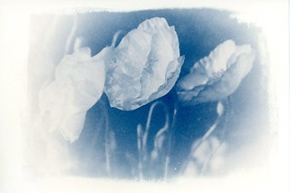 Cyanotype print made on an old photographic enlarger directly from 120 negative film without using a conventional contact printer and digital negative processing