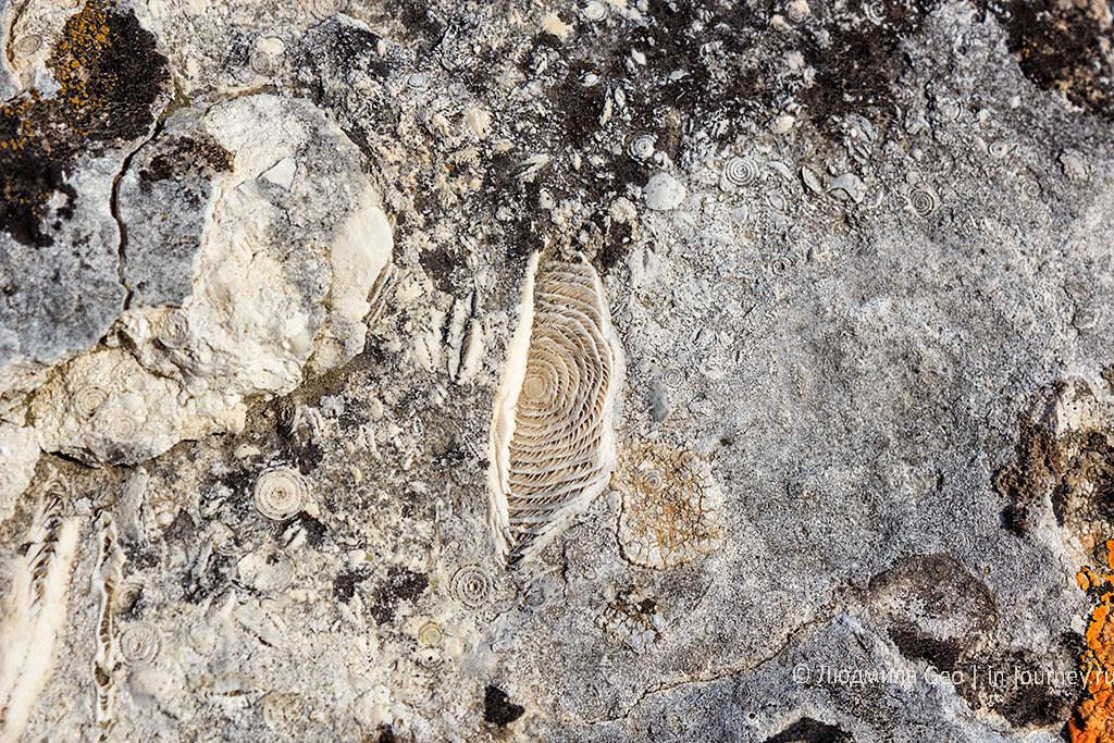 окаменелости в Инкерманской долине