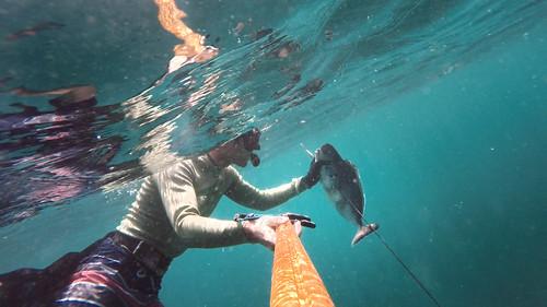 Balint_spearfishing
