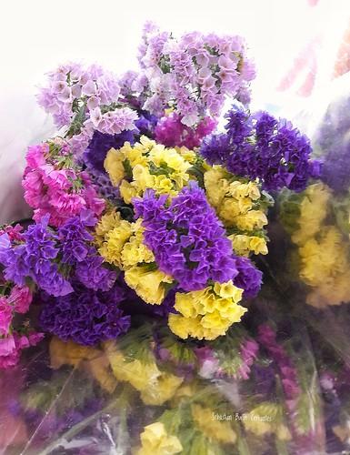 Hoy te llevo flores