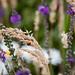 Scotland's Gardens Craigintinney Telferton July 2018 -95
