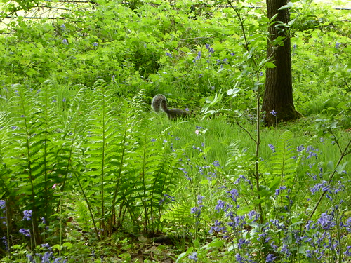 Not Quite Alone in the Woodland